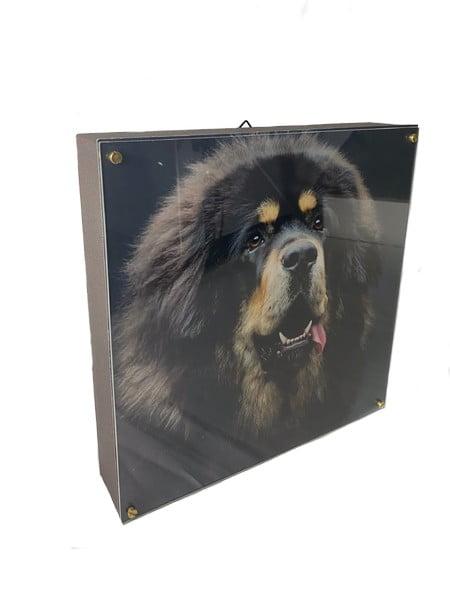 fotolijst-dieren-urn-met-plexiglas