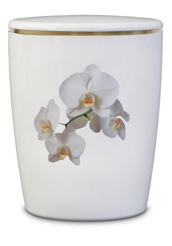 witte orchideeën biologische urn